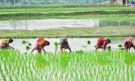 नए कृषि कानून लागू नहीं हुए, तो हासिल नहीं होगा किसानों की आय दोगुना करने का लक्ष्य: रमेश चंद