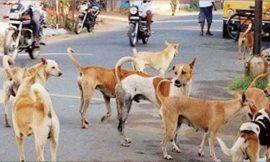 बठिंडा में आवारा कुत्तों का आतंक, पांच साल की बच्ची को बुरी तरह से नोंचा, मौत